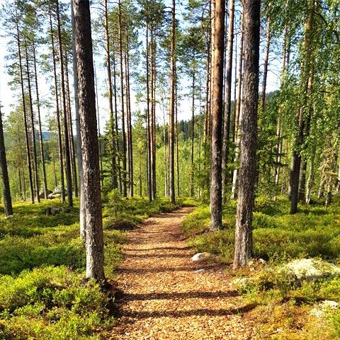 Vandring mot Gidebergets toppstuga i Björna nära Örnsköldsvik